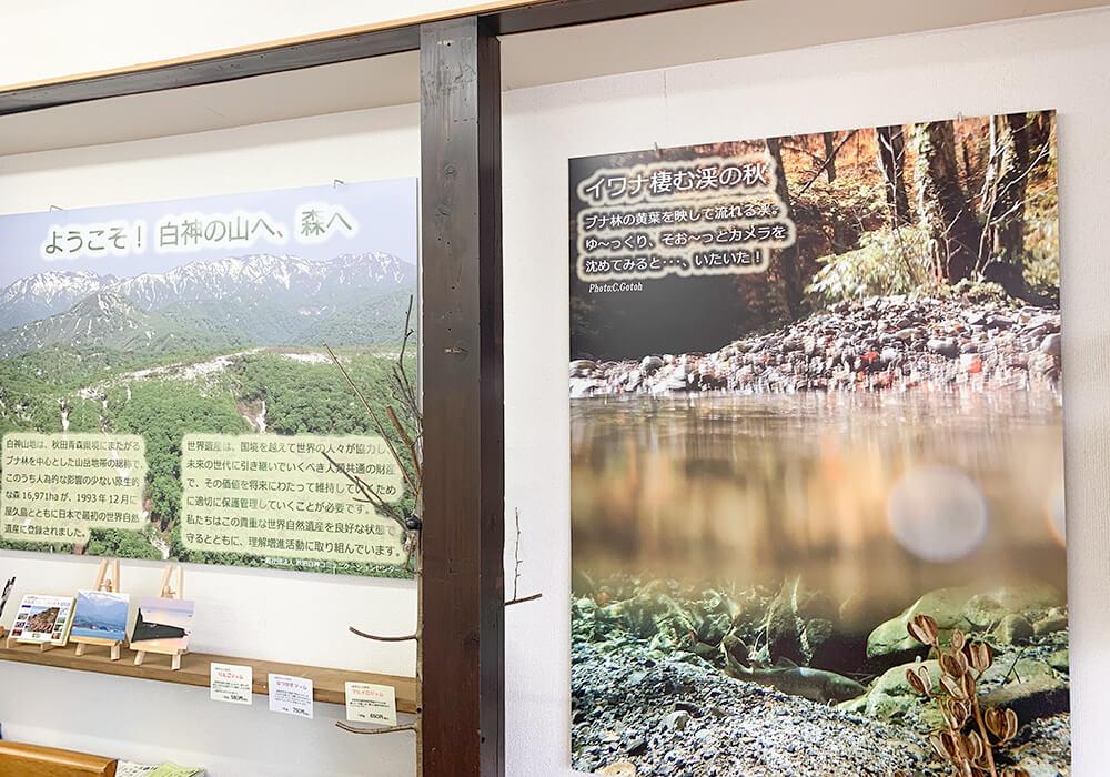 白神山地の綺麗な写真やパンフレット1