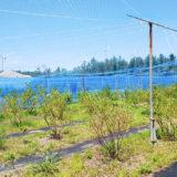 【八峰町峰浜沼田】しらかみブルーベリー畑さんにブルーベリー狩りに行ってきました!