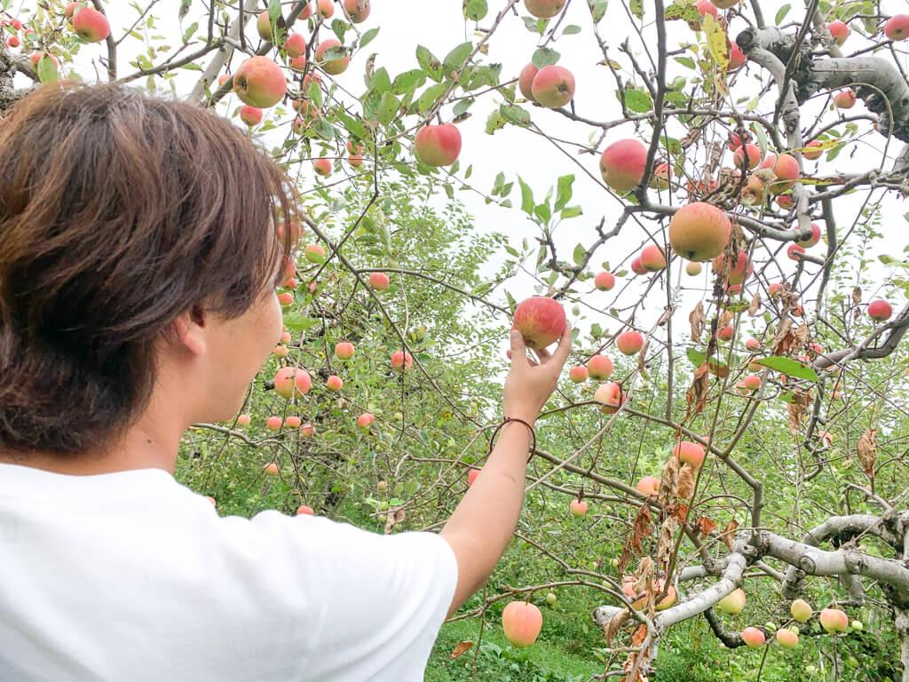 る小ぶりでかわいいりんご