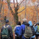 【10月31日】白神山地をレジェンドガイドと紅葉の森を歩くお得なツアーがあるみたい!