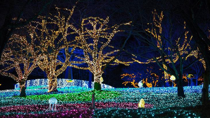 【能代市】エナジアムパークでイルミネーションのイベントが開催されているみたい!