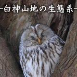 【1月9日〜】白神山地世界遺産センターで「森羅万象~白神山地の生態系」写真展が開催されてるみたい!