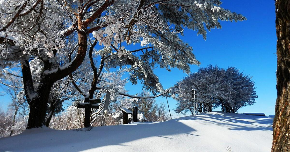【2月23日】きみまち阪の雪原を歩く「かんじき自然観察会」が開催されるみたい!