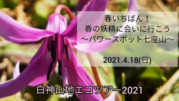 【4月18日】春いちばん!七座山でエコツアーが開催されるみたい!