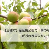 【三種町】金仏梅公園で「梅のもぎ取り販売」が行われるみたい!