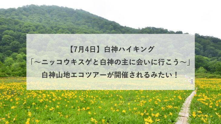 【7月4日】「白神ハイキング~ニッコウキスゲと白神の主に会いに行こう〜」白神山地エコツアーが開催されるみたい!