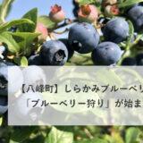 【八峰町峰浜沼田】しらかみブルーベリー畑さんで「ブルーベリー狩り」が始まるみたい!