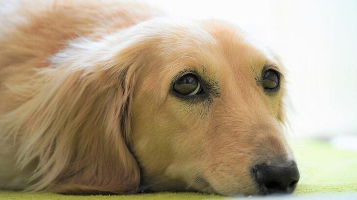 【10月23日】能代市中央公民館で「動物の飼い方・しつけ方講座」が開催されるみたい!